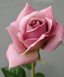 Kunstbloem paarse roos
