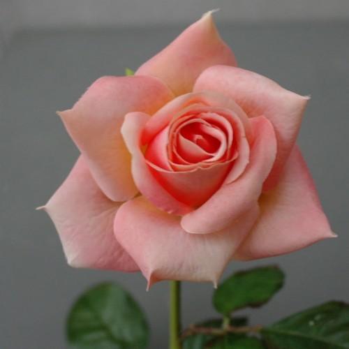 Kunstbloem roze roos